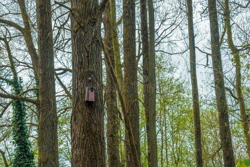 Voljär i en skog royaltyfri fotografi
