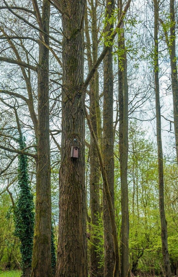 Voljär i en skog arkivbilder