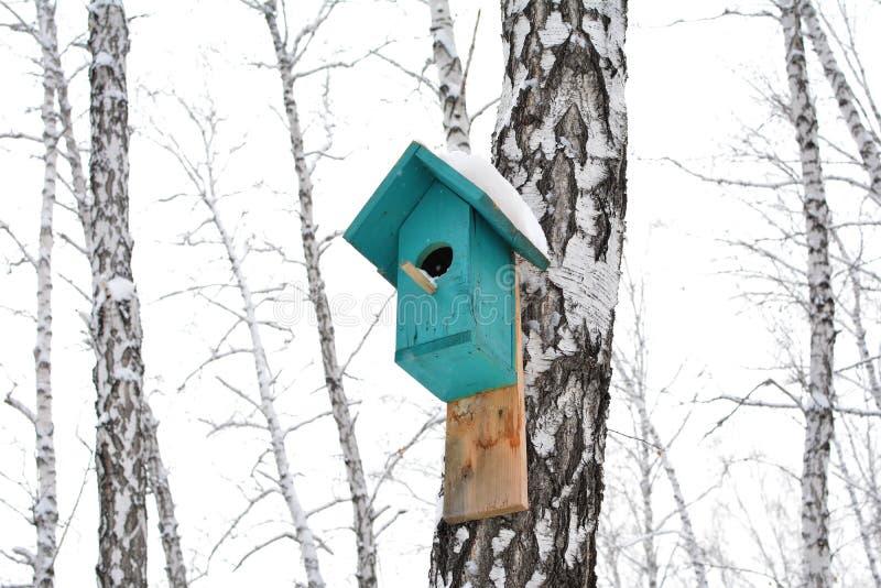 Voljär på björk Bygga bo asken på trädet arkivbilder