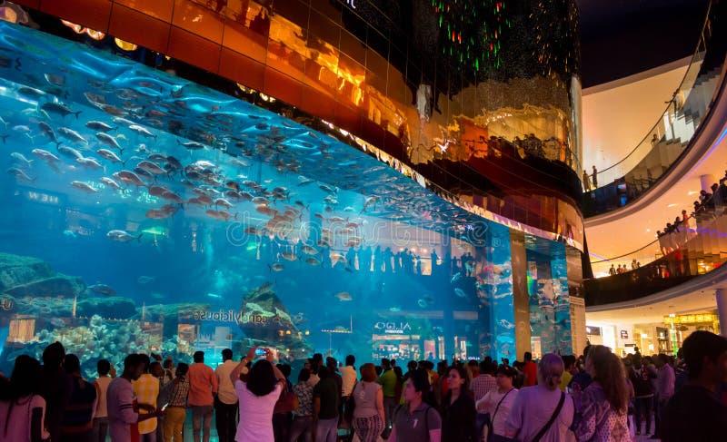 Volkeren die op Grootste aquarium en vissen letten bij de Wandelgalerij van Doubai stock afbeeldingen