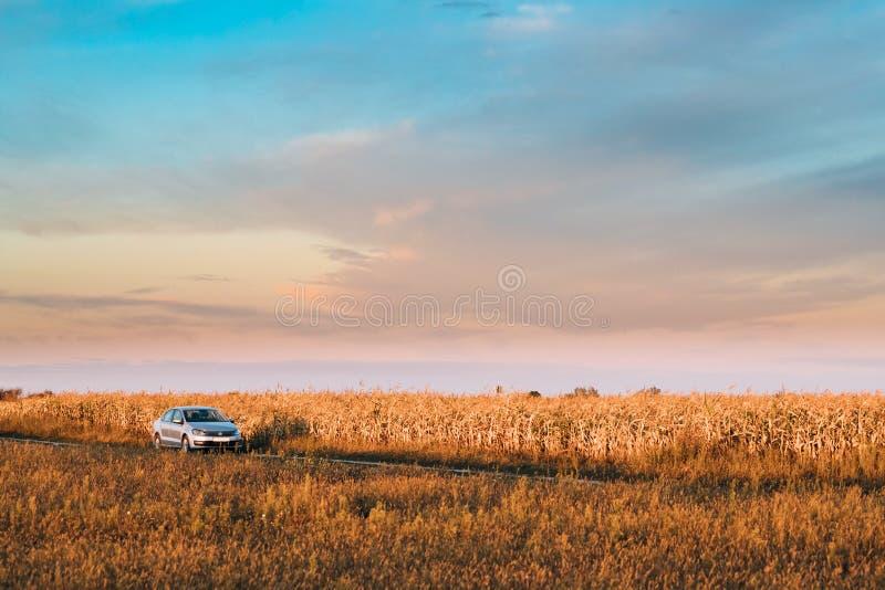 Volkswagen Polo Car Sedan Parking Near landsväg i Autumn Field arkivbild