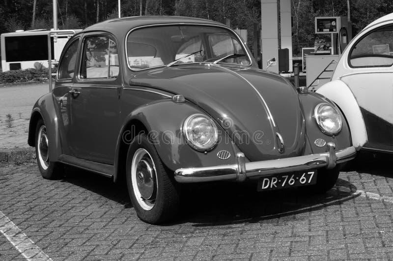 Volkswagen typ - 1, skalbagge fotografering för bildbyråer