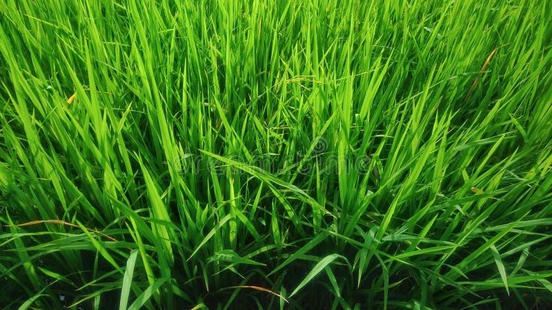 Voll vom Grün stockbilder