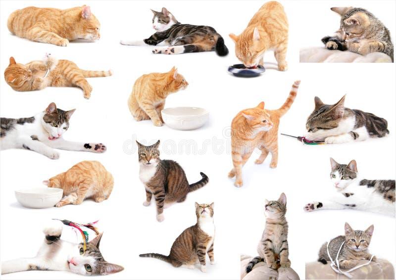 Voll von den Katzen stockfotografie