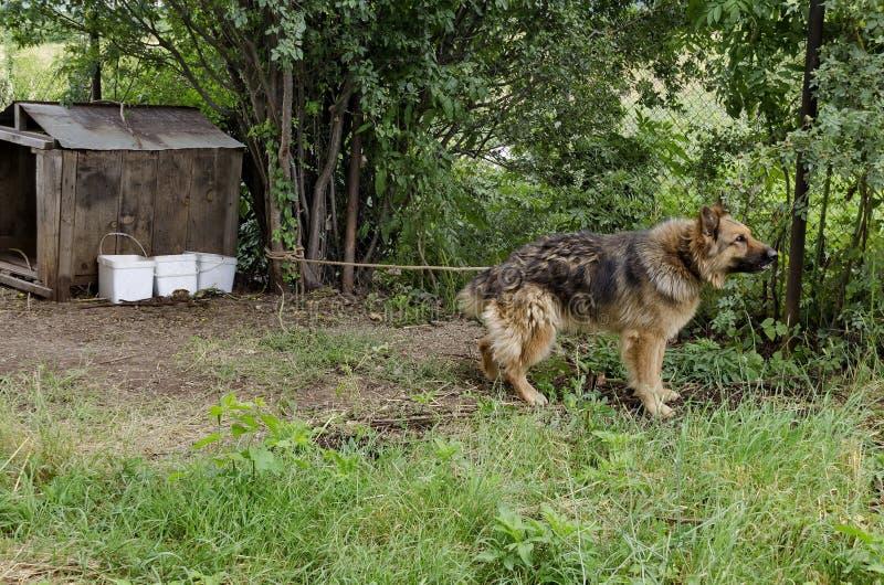 Vollblütiger Hund auf dem Naturschutz-Landhaus lizenzfreie stockfotos