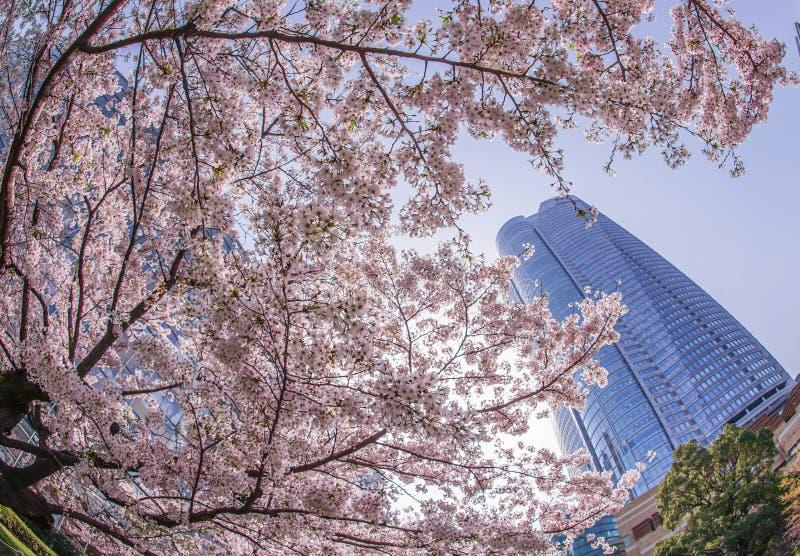 Volle Blüte des Kirschbaums und des Roppongi Hills stockfotos