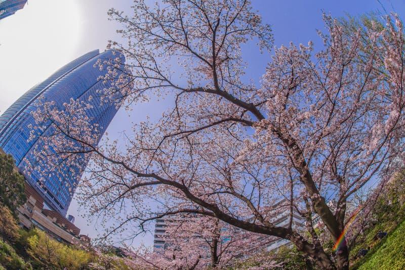 Volle Blüte des Kirschbaums und des Roppongi Hills lizenzfreie stockfotos