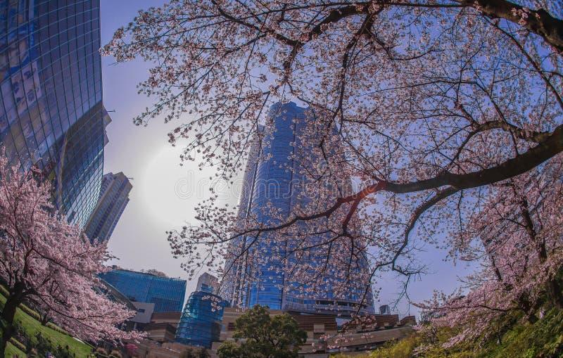 Volle Blüte des Kirschbaums und des Roppongi Hills stockfotografie