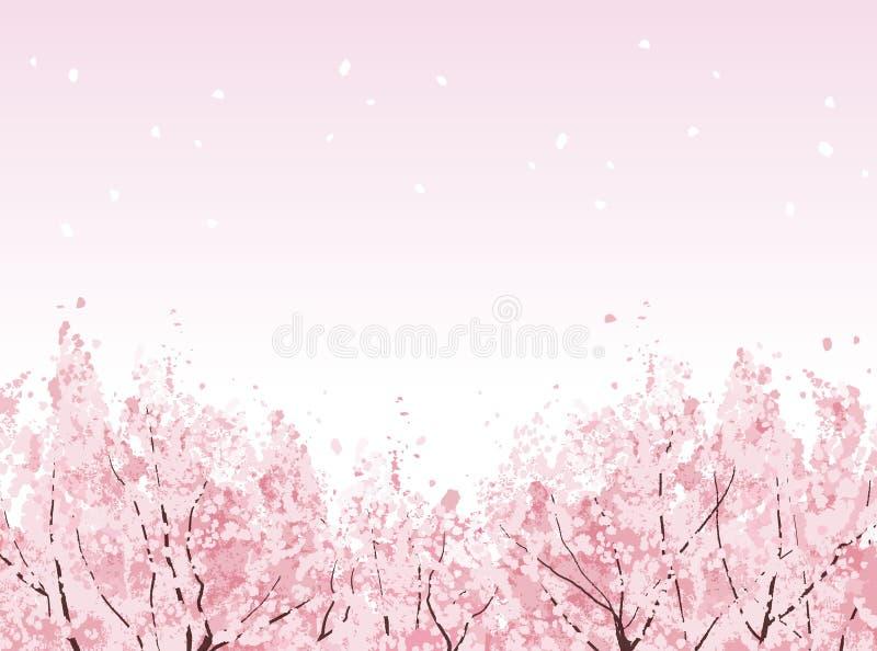 Volle Blüte von schönen Kirschblütenbäumen stock abbildung