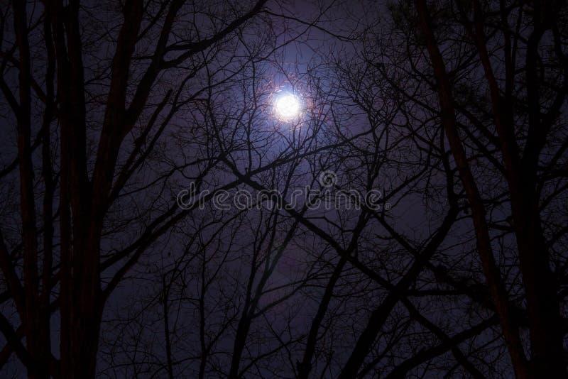 Volle maan in bewolkte hemel bij nacht royalty-vrije stock foto's