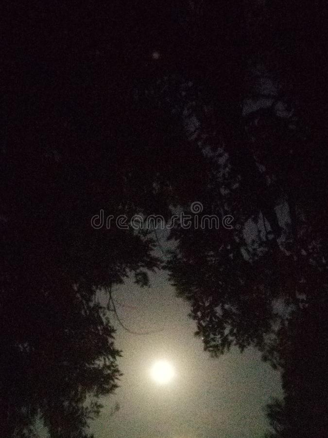 Volle maan in de bomen stock foto's