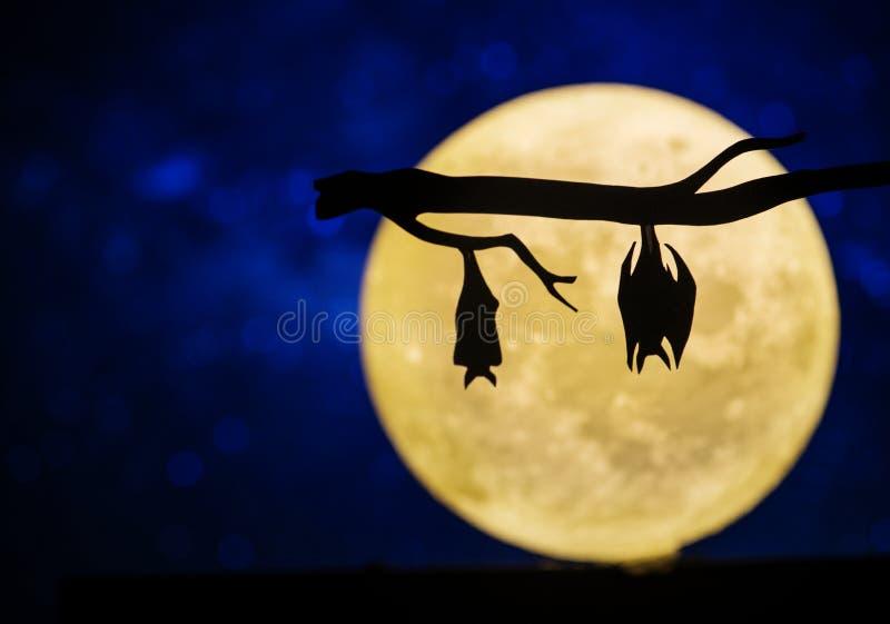 Volle maan in de nachthemel stock foto's