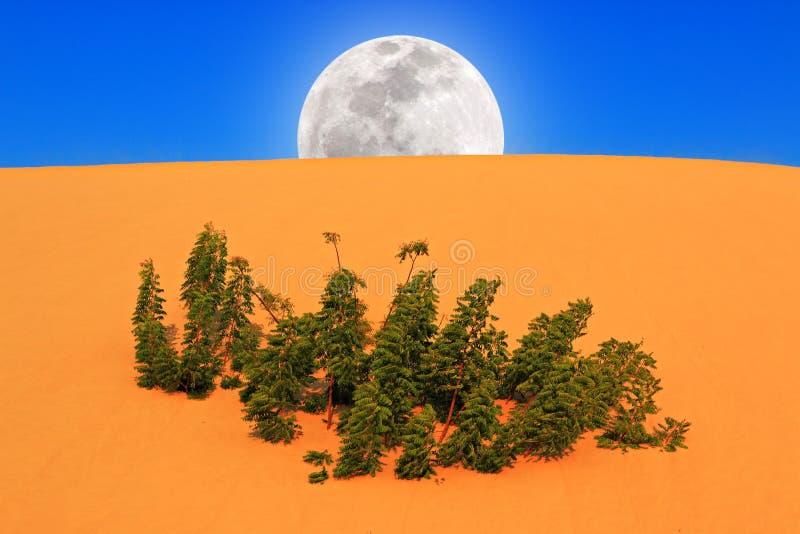 Volle maan die in Woestijn toenemen royalty-vrije stock afbeeldingen
