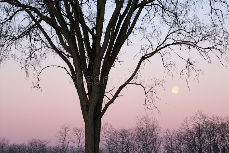 Volle maan en Naakte Bomen royalty-vrije stock foto