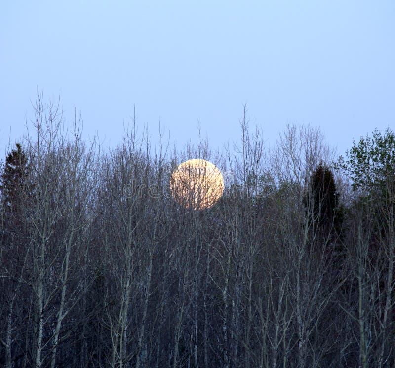 Volle maan het toenemen royalty-vrije stock afbeelding
