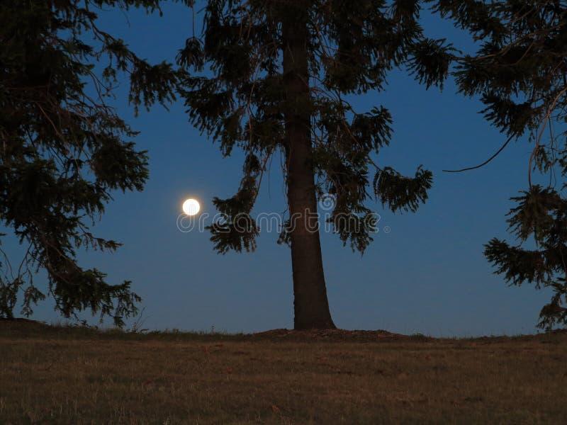 Volle maan landelijk landschap royalty-vrije stock afbeelding