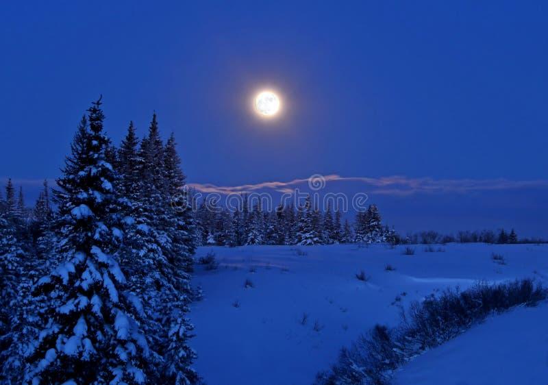 Volle maan met sneeuw stock foto's