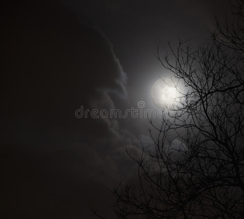 Volle maan in nachthemel met wolken en silhouet van bomen. royalty-vrije stock afbeelding