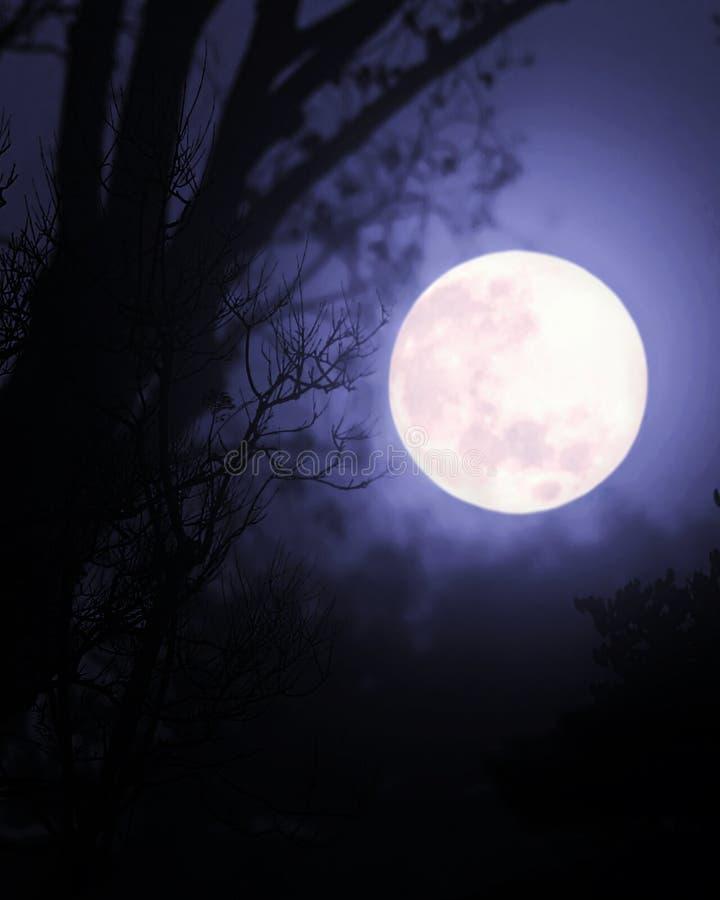 Volle maan onder bomen royalty-vrije stock foto's