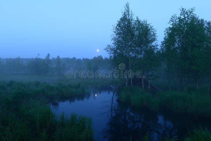 Volle maan op een witte nacht door de bosrivier stock foto's
