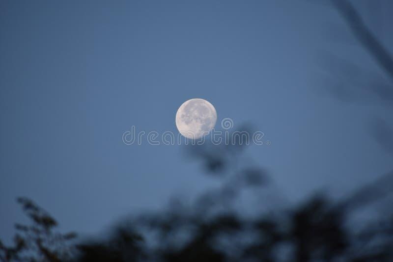 Volle maan over de bomen royalty-vrije stock foto