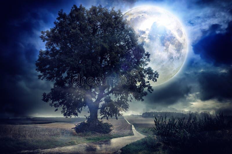 Volle maan over graangebied stock afbeelding