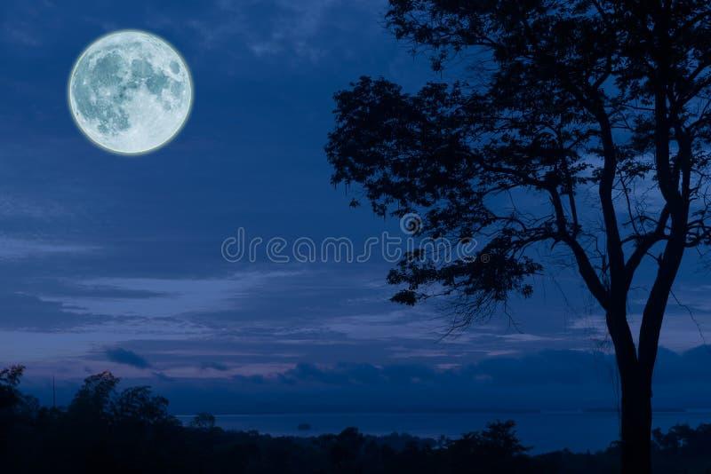 Volle maan, wolken en hemel met bos stock foto