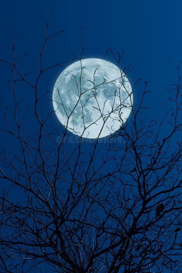 Volle maan, wolken en hemel met bos royalty-vrije stock fotografie