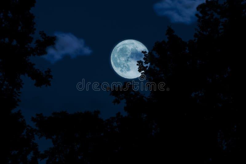 Volle maan, wolken en hemel met bos in de donkere nacht royalty-vrije stock afbeelding