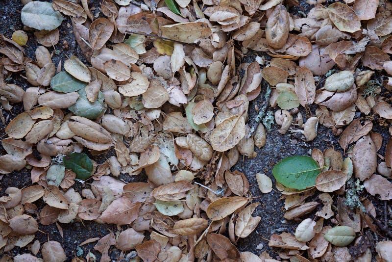 Volledig die Kader van Autumn Leaves op Grond wordt geschoten stock foto's
