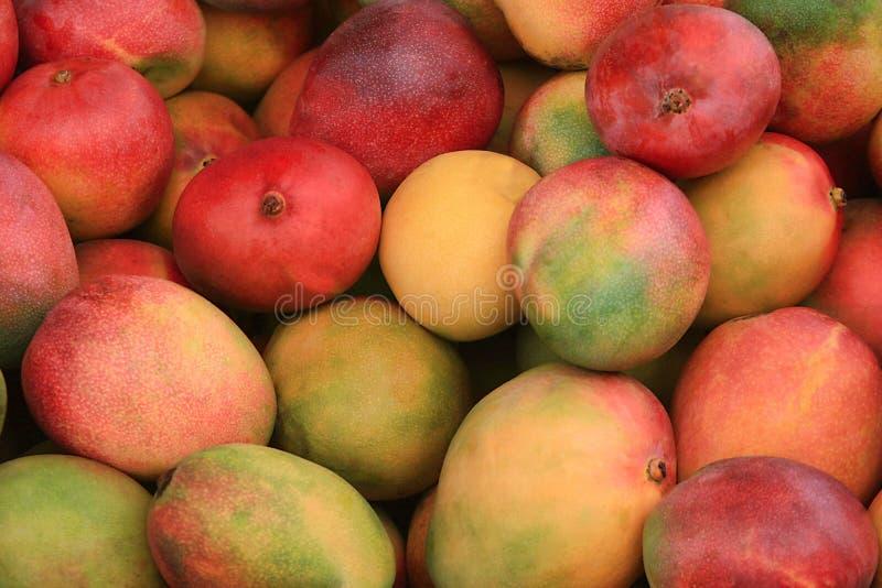 Volledig die kader van rijpe mango's wordt geschoten stock foto