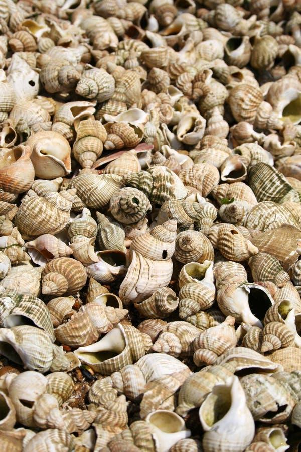 Volledig frame dat van shells is ontsproten stock afbeelding