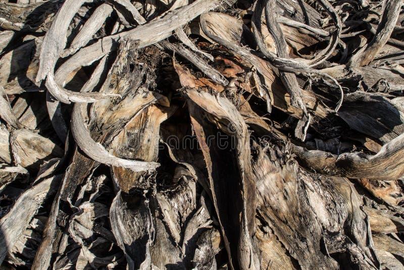 Volledig kader van het snoeien van residu's stock fotografie