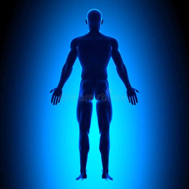 Volledig Lichaam - Achtermening - Blauw concept stock illustratie