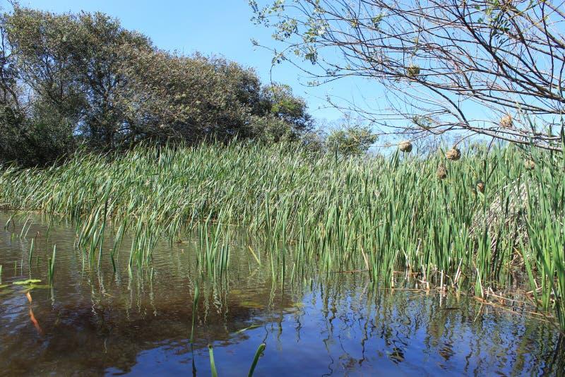 Volledige dam op een landbouwbedrijf in Afrika na regen royalty-vrije stock foto's