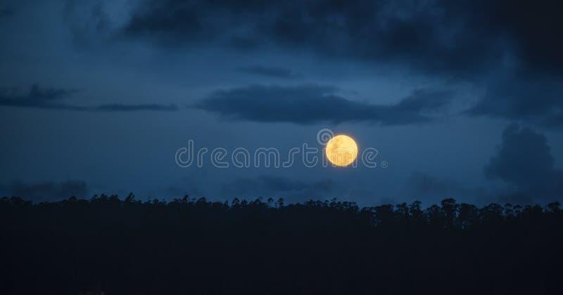 Volledige Gele Maan die in het Regenwoud van Amazoni? toenemen stock fotografie