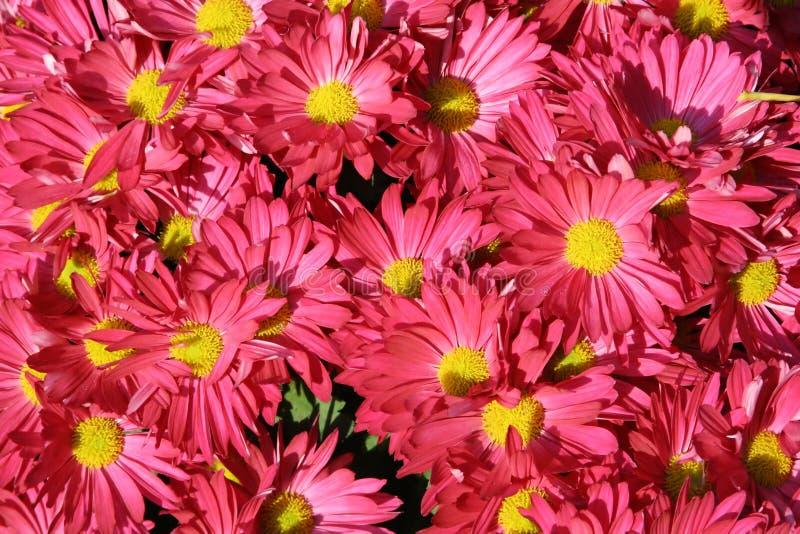 Volledige het scherm roze bloemen royalty-vrije stock foto