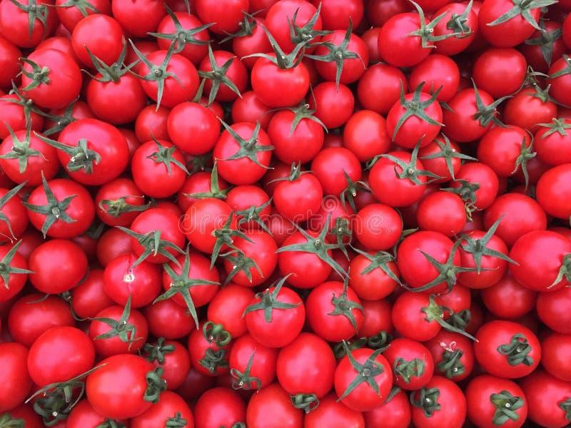 Volledige kader Verse Tomaten royalty-vrije stock foto's
