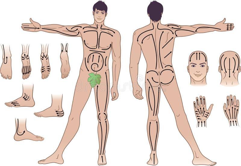 Volledige lengte (voorzijde & rug) meningen van een bevindende mens vector illustratie