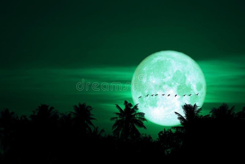 voller Eimond zurück auf Schattenbildvögeln auf dem nächtlichen Himmel stockfoto