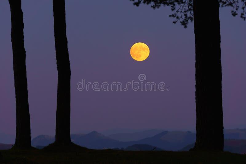 Voller gelber Mond auf Wald stockfoto