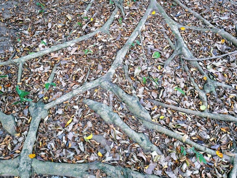 Voller Rahmen-Hintergrund von Baum-Wurzeln aus den Grund lizenzfreie stockfotografie
