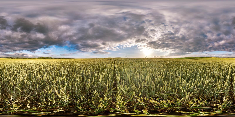 Volles kugelförmiges nahtloses hdri Panorama 360 Grad Winkelsicht unter Roggen- und Weizenfeldern im Sommerabendsonnenuntergang m stockfoto