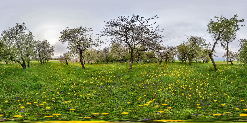 Volles nahtloses kugelförmiges Panorama 360 Grad Winkelsicht in blühendem Apfelgartenobstgarten mit Löwenzahn in equirectangular lizenzfreies stockfoto