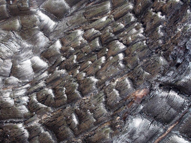 Volles Rahmenbild des gebrannten schwarzen Holzes mit gebrochener verkohlter Beschaffenheit lizenzfreie stockfotografie
