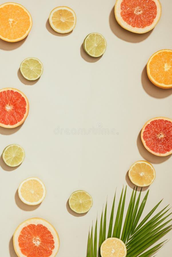 volles Rahmenbild des Palmblattes, Scheiben von Pampelmusen, Kalke, Zitronen und Orange lizenzfreies stockbild