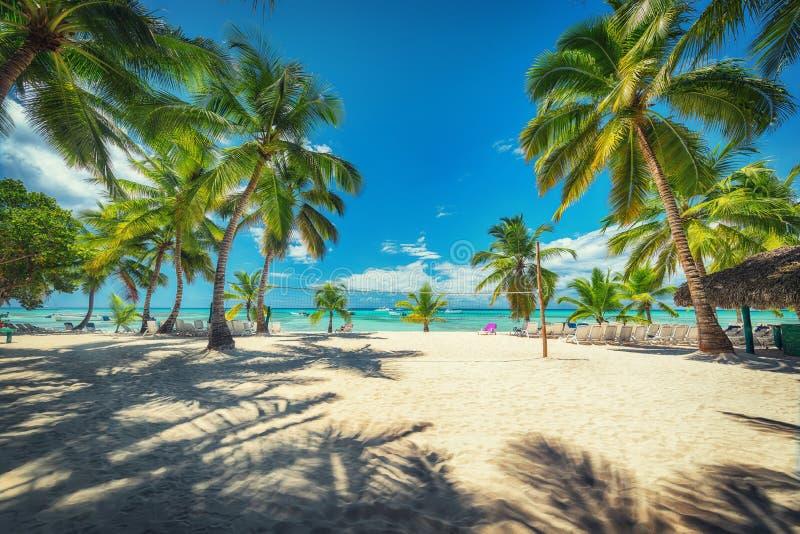 Volleyball netto op tropisch strand en Caraïbische overzees Tropisch strand met palm royalty-vrije stock afbeeldingen