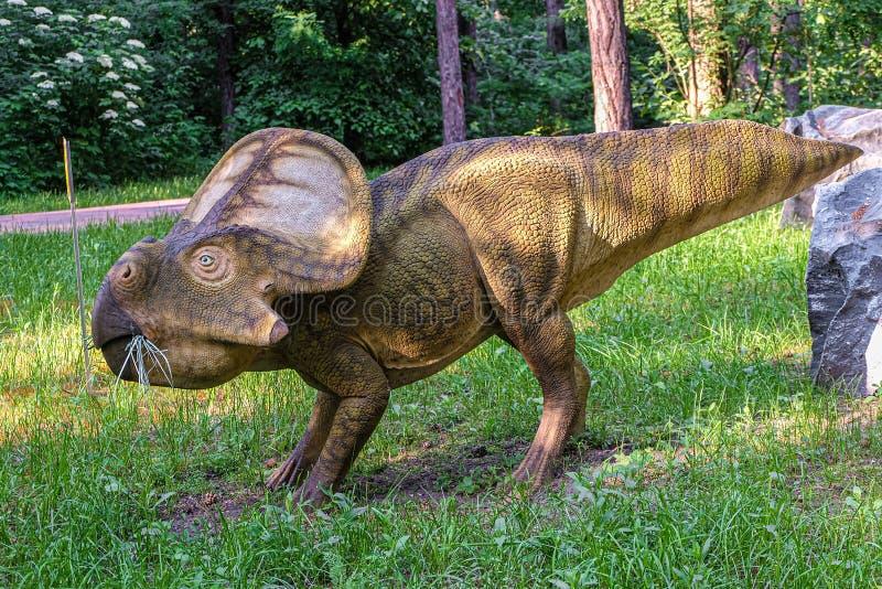 Vollgroßstatue von Protoceratops im Wald des Belgorod Dinoark Herbivore Dinosaurier stockfotos