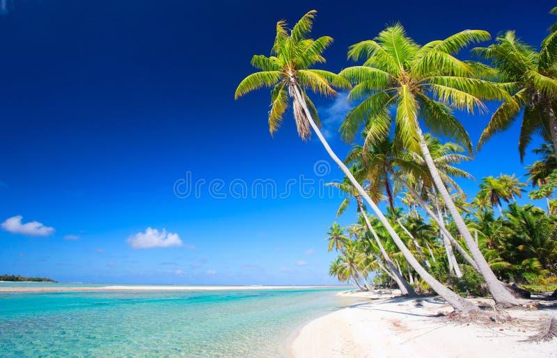 Vollkommener tropischer Strand stockfotografie