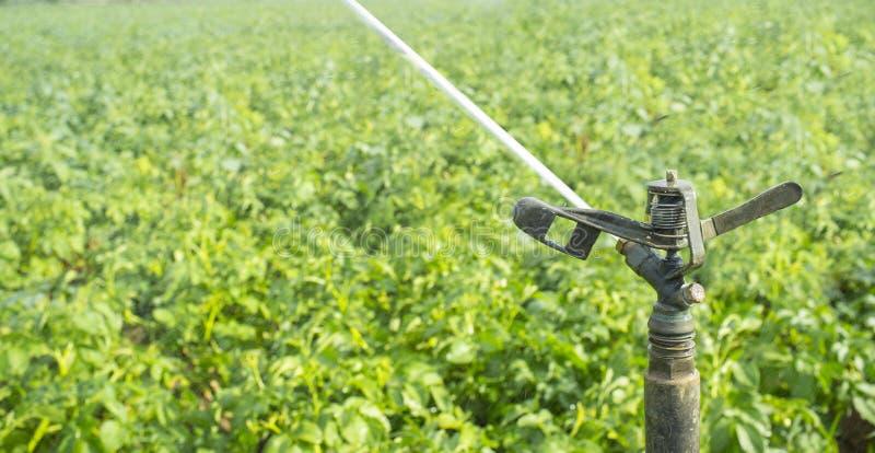 Vollkreisauswirkungsberieselungsanlage bei der Arbeit über grünem Feld lizenzfreies stockbild